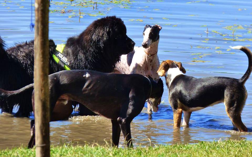 spiaggia cani lago martignano roma lazio