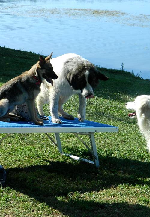 spiaggia cani agriturismo roma lazio