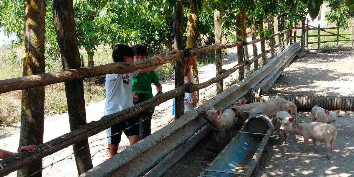 fattoria didattica aperto agriturismo maiali stato brado roma lazio