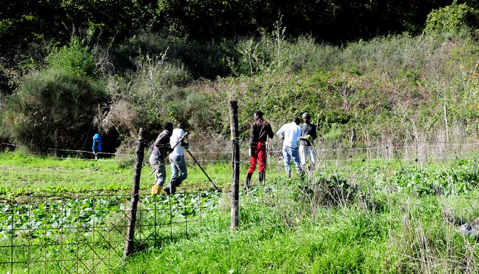 agricoltura sociale Barikama casale martignano roma lazio